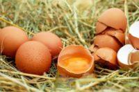 egg-1510449_1920-300x200